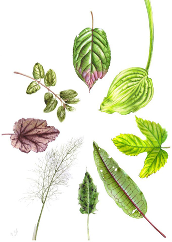 Assorted leaves by Chris Taylor