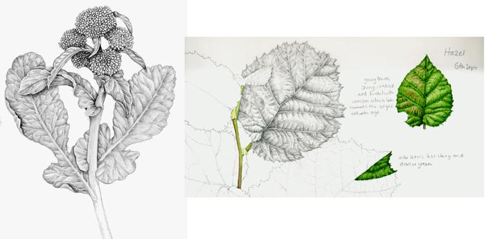 leaves tonality