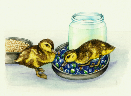 marbles and ducklings