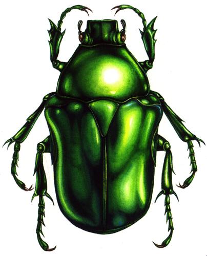 beetle, shine, iridescence,