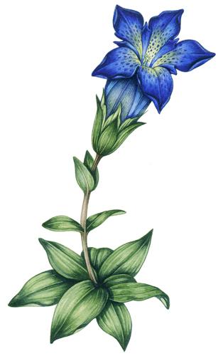 mixing greens, botanical illustration,