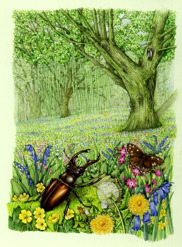 beetle, coleoptera, woodland habitat,
