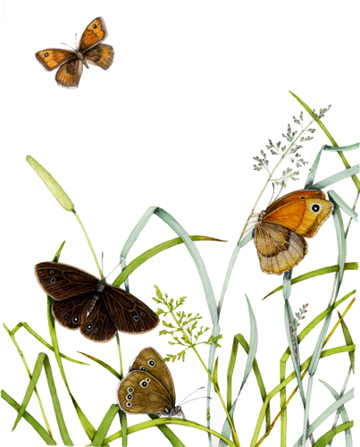 butterfly, insect, lepidoptera, butterflies,