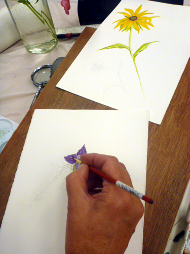 Llandrindod, art workshop, flowers, workshop, drawing,