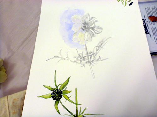Llandrindod, art workshop, flowers, workshop, white flower, cosmos,