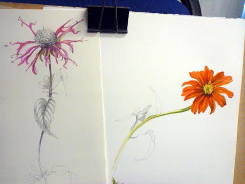 Llandrindod, art workshop, flowers, workshop, daisy, echinacea,