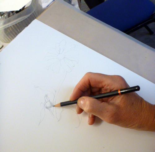 Llandrindod, art workshop, flowers, workshop, drawing, graphite, pencil,
