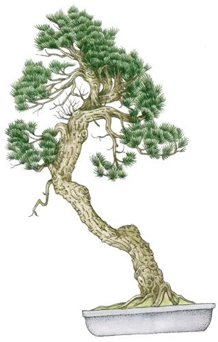 Diagrams, pen and ink, top wash, colour wash, gardening, japan, bonsai garden,