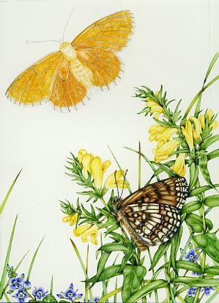 tutorial, art tutorial, entomological illustration, flower art, watercolour lesson, watercolor, natural history illustration, scientific illustration, sciart, botanical illustration, step by step, sxs, illustrating,