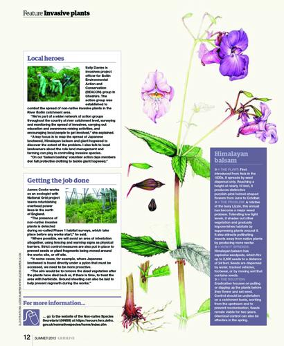 invasives, published, hogween, himalyan balsam, japanese knotweed,