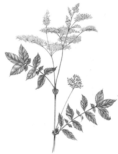 Botanical Illustration Why It S Still Relevant Lizzie Harper