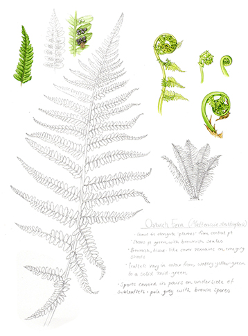 negative space ferns