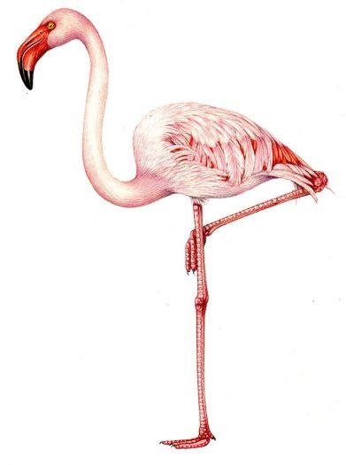 greetings card design flamingo