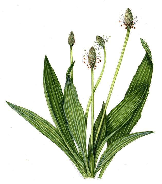 nettle cure
