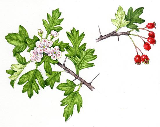 edible foraging