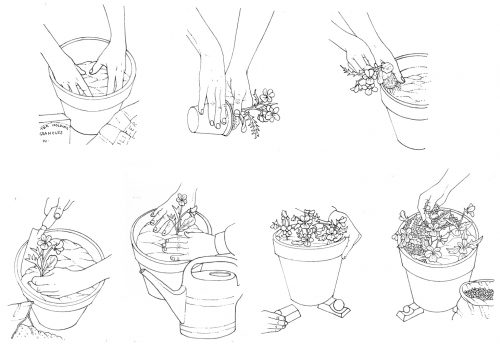 Planting out a pot natural history illustration by Lizzie Harper