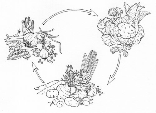 Crop rotation natural history illustration by Lizzie Harper