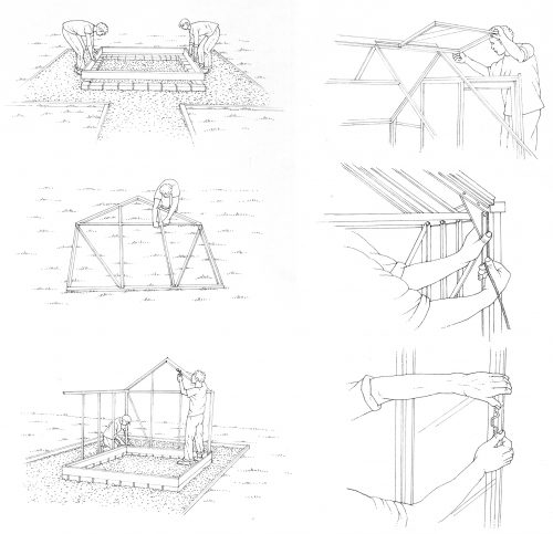 Erecting a greenhouse natural history illustration by Lizzie Harper