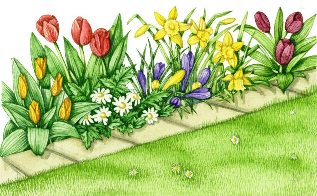 Gardening border edging natural history illustration by Lizzie Harper
