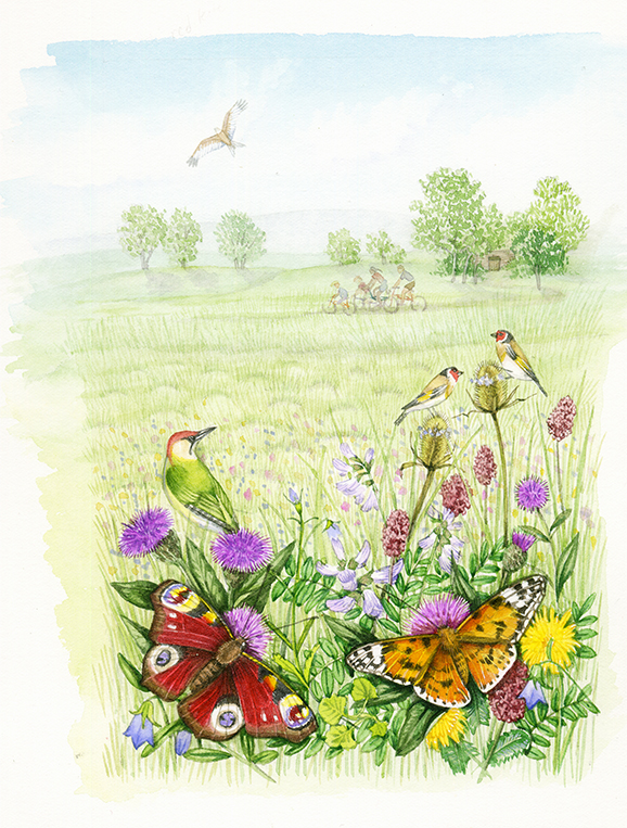 Meadow land landscape with butterflies natural history illustration by Lizzie Harper