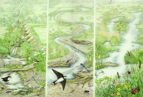 River landscape natural history illustration by Lizzie Harper