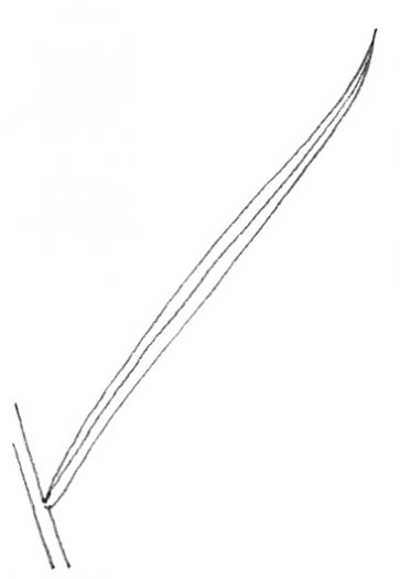 Linear Leaf Diagram