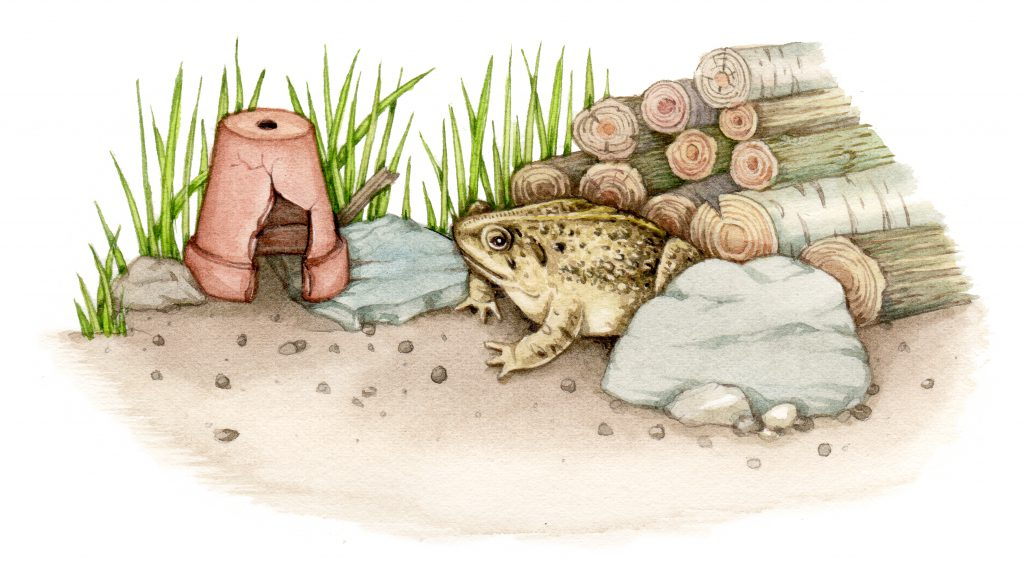 Common toad with wildlife garden home illustration by Lizzie Harper