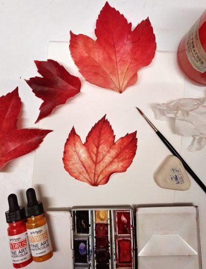 leaf, autumn, coolour, watercolour,