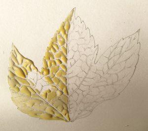 leaf, autumn, fall, botanical art, process, tutorial