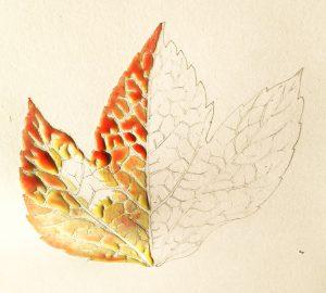 Leaf botanicalillustration illustration autumn fall colour nature