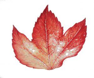 leaf tree creeper autumn watercolour botanicalillustration