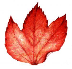 leaf, autumn, fall, leaves, watercolour watercolor