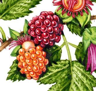 botanical step by step