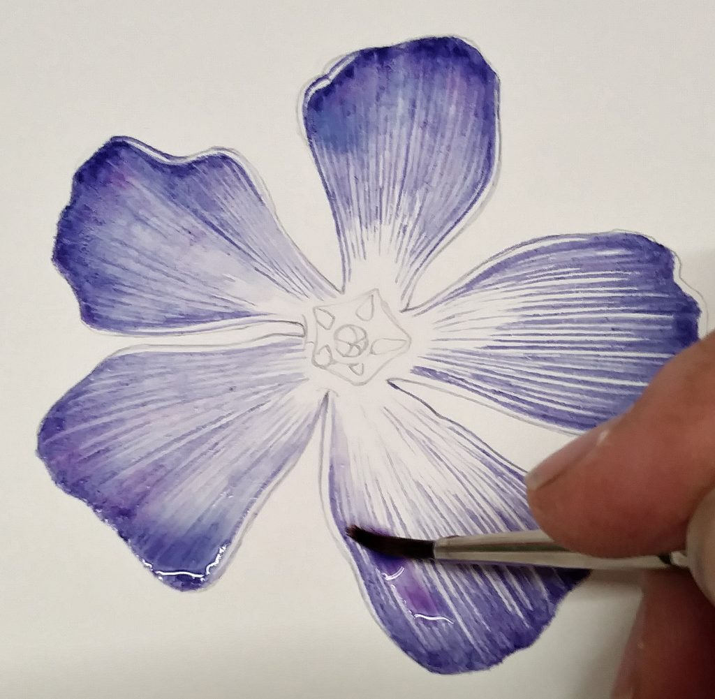 Top wash on the layered colour on the periwinkle flower painting