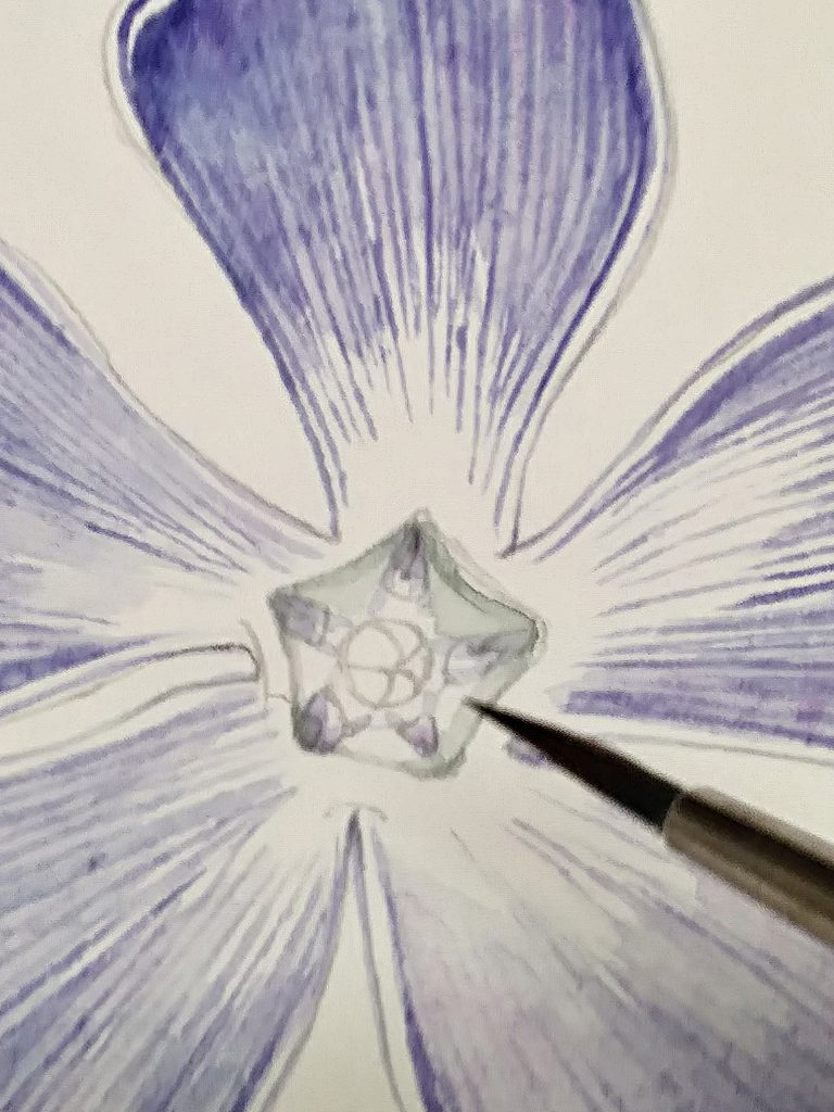 painting the centre of the periwinkle botanical illustration