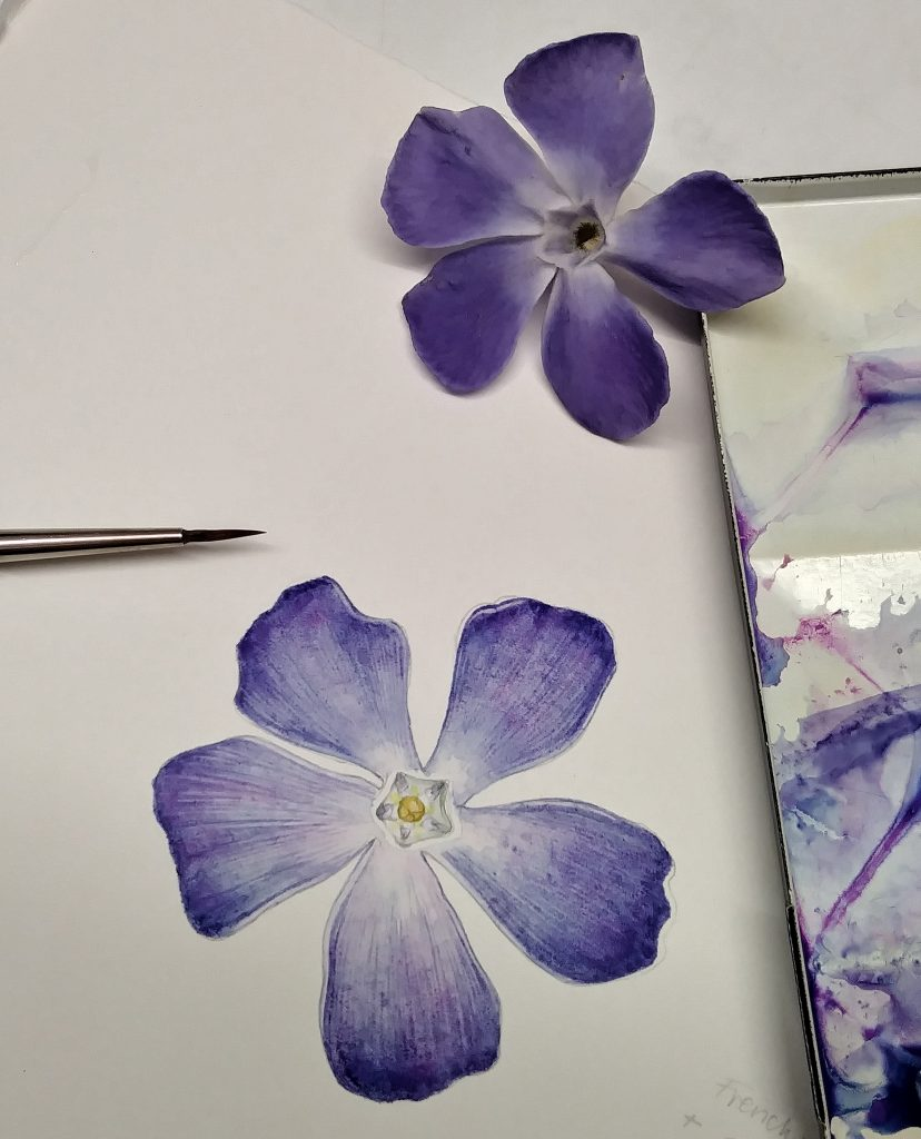 comparison of flower and painting of the periwinkle