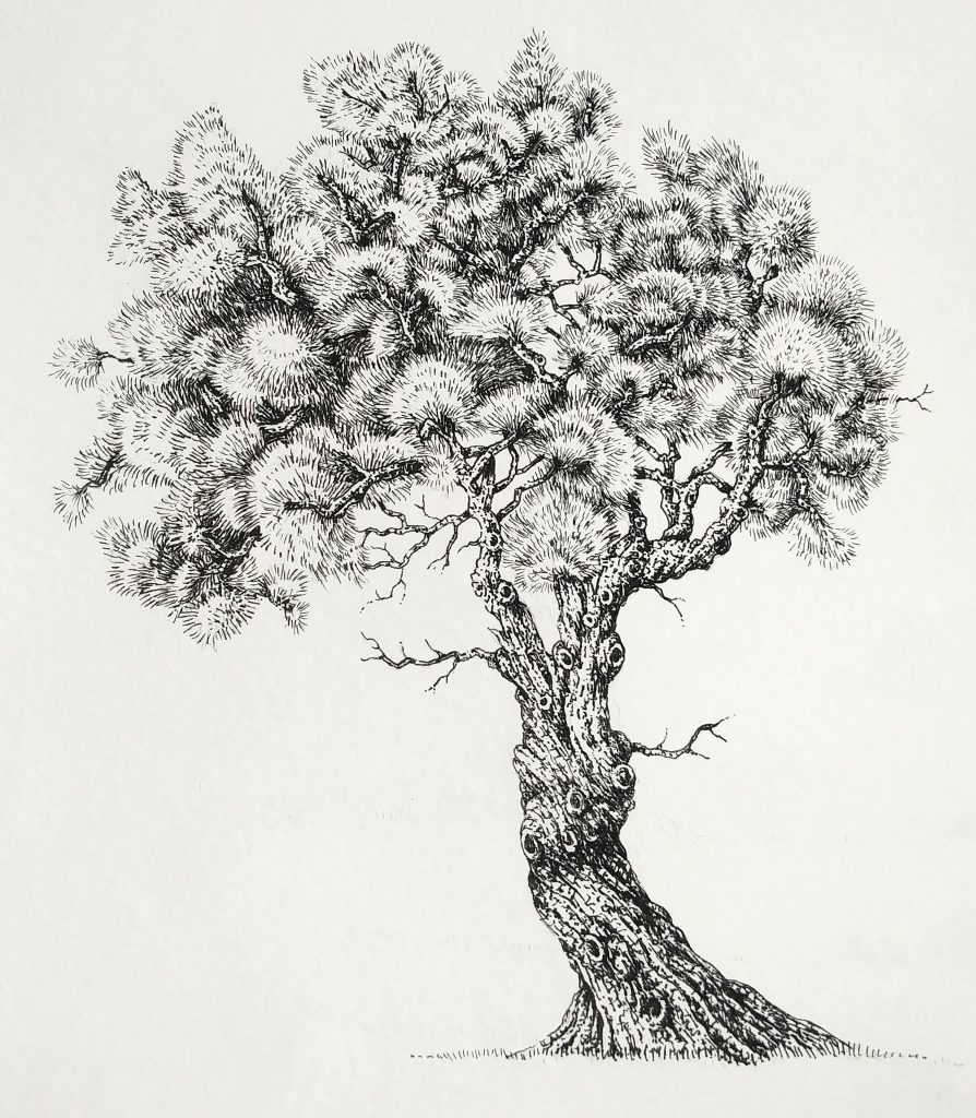 Pen And Ink Illustrations Of Trees Lizzie Harper